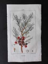Turpin C1815 Antique Botanical Print. Oliban. Incense 253
